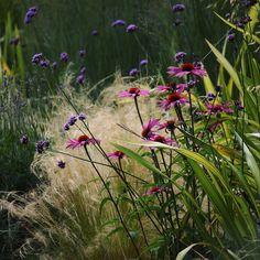 "@digitalglance on Instagram: ""Flower combinations. #flowers #mixedborder #flowercombinations #gardenplants #sundaysun"""