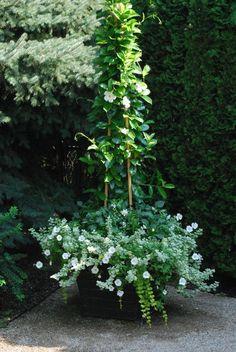 White mandevilla. Summer Whites | Dirt Simple