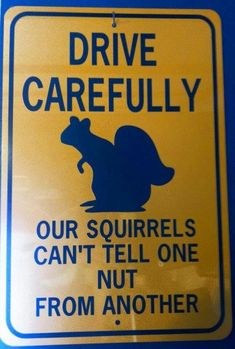 Humpday Humor Discover 30 Squirrels Memes And Photos That Will Drive You Nuts 30 Squirrels Memes And Photos That Will Drive You Nuts Squirrel Memes, Cute Squirrel, Baby Squirrel, Cat Memes, Squirrels, Drunk Squirrel, Squirrel Art, Funny Animal Pictures, Funny Animals