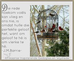 Afrikaanse Inspirerende Gedagtes & Wyshede: Die rede hoekom voëls kan vlieg en ons nie, is omd...