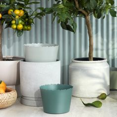 Polaris flower pot with saucer cm from Broste Copenhagen Broste Copenhagen, Flower Pots, Flowers, Olive Tree, Scandinavian Design, Planter Pots, Interior Decorating, Ceramics, Fat