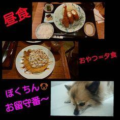今日のランチ🍴と、おやつのパンケーキ🍰 美味しかったぁ~🎵😆👍 太るから、夕食無し💦😣😣😣 レオちゃん🐶お留守番~🎵 頑張ってくれてたけど、スネコになってた~💦😅 ごめんね💦😅😅😅 ・ #今日のランチ#マークイズみなとみらい#美味しかった#フライいろいろ #バナナパンケーキ #生クリーム多め  #来月はお肉 #レオちゃん#おるすばんありがとう #すねこ #すねお #つまんないよね #きつねわんこ  #かわいい #溺愛犬#愛犬
