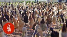 Got a Pest Problem? Call the Quack Squad - YouTube
