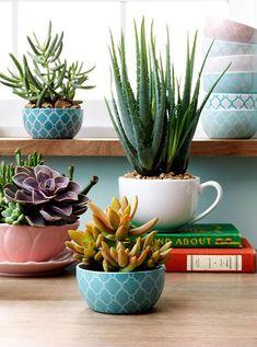 Imagem do site: www.cozinhasitatiaia.com.br A decoração com suculentas é a mais nova aposta para aquelas pessoas que não dispõe de muito tempo. Quem não gosta de trazer a natureza pra dentro de casa sem ter muito trabalho?
