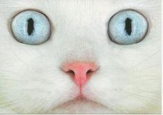 white cat eyes
