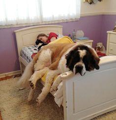 Тот момент, когда завидуешь своей собаке!
