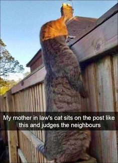 55 funny animal pictures of the day - .- 55 lustige Tierbilder des Tages – 55 funny animal pictures of the day – pictures - Funny Animal Jokes, Stupid Funny Memes, Cute Funny Animals, Cute Baby Animals, Funny Humor, Memes Humor, Pet Humor, Funniest Animals, Crazy Animals