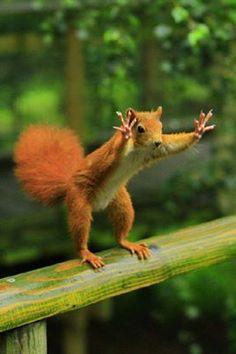 STOP!  Wat probeert deze eekhoorn je te vertellen?