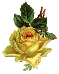 Antique Floral Graphic - Beautiful Yellow Rose - The Graphics Fairy