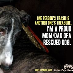 Proud parent of a rescued dog