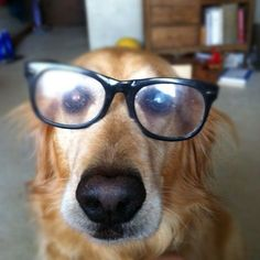 Do these glasses make me look smart..........cause I am!