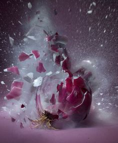 Exploding Red Onion