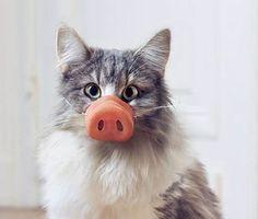 Bruxelles compte plus de 141.000 chats. Une population féline en extension qui pose problèmes, tout d'abord, pour les chats eux-mêmes. Bruxelles Environnement lance une campagne de sensibilisation pour encourager les Bruxellois à stériliser leur chat.