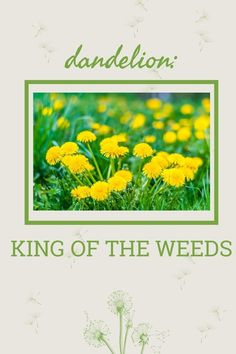 If I could be any weed, I would be the cheerful, useful dandelion. Click here to find out why. Dandelion Benefits, Sprinkler Heads, Rain Bird, Lawn Maintenance, Weed Control, Irrigation, Easy Install, Green Grass