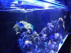The best aquarium wave maker isn't one that simply makes waves. The point of the best nano wave maker or large aquarium wave maker is to stir up debris in the tank. Wave-like flow allows. Marine Aquarium, Aquarium Fish Tank, Types Of Waves, Navy And Copper, Water Movement, 55 Gallon, Saltwater Tank, Underwater Creatures