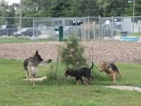 The Urbana Dog Park. Lucy and I will be here all the time!