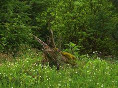 Heinrich Wilhelm: Riesenholzschnecke auf der Lichtung - Leinwandbild auf Keilrahmen
