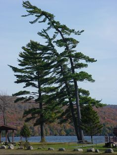 Meacham Lake...be sure to hike up Debar Mountain! Beautiful!