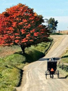 Amish buggy on winding road in fall~ Sarah's Country Kitchen ~