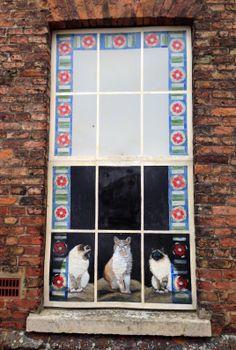Painted window on Purfleet Quay, King's Lynn, Norfolk, UK
