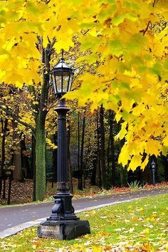 A quaint light pole in the midst of a blaze of bright yellow autumn leaves ☮ * ° ♥ ˚ℒℴѵℯ cjf Autumn Day, Autumn Leaves, Beautiful World, Beautiful Places, Autumn Scenes, Fall Pictures, Mellow Yellow, Bright Yellow, Belle Photo