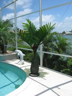 6' LED Lighted Bottle Palm Tree. Great for your deck, porch, around your pool and anywhere you want to light up your night.