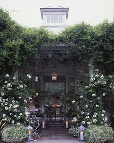 Nothing lends a home ethereal allure quite like a halo of climbing vines. Whether wrapped around courtly columns or trained to encircle an arbor, an explosion of climbing roses or aromatic honeysuckle will enthrall all who enter your home.