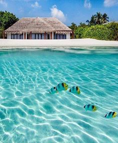MALDIVES- Does it get any better than this?