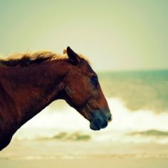 Beach bum chix blog post about a horse on the outer banks.