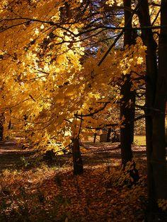Golden Season Bedford, PA