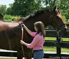 Tips for Bathing Your Horse