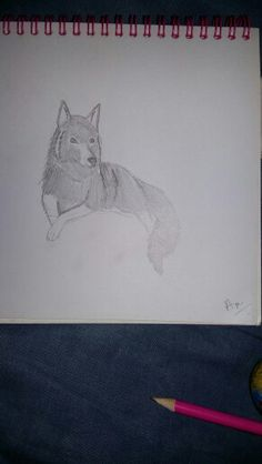 Wolf lying down. Drawn using a tuitorial on YouTube. Repin with credit. Drawn by Blaze Runner ( Blazeclaw, Alphaheart ).