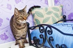The Bluebell Suite - Longcroft Luxury Cat Hotel