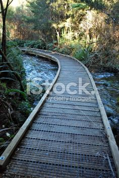 Lead the Way Royalty Free Stock Photo Images Of Peace, Wooden Path, Deep Photos, Forest Bathing, Photography For Sale, Lead The Way, Image Now, Serenity, Paths