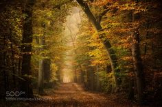 Lush by npieters. Please Like http://fb.me/go4photos and Follow @go4fotos Thank You. :-)