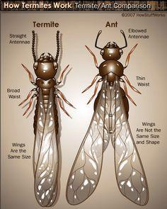 60 Destructive Termites Ideas Termites Termite Control Termite Treatment