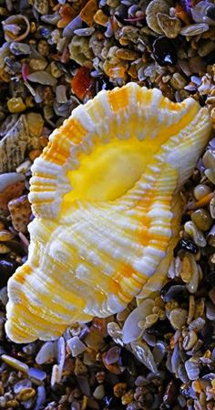 sea shell                                                                                                                                                                                 More