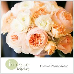 Classic Peach Rose #Intrigueteaches https://www.intrigueteaches.com/