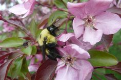 Bumble Blossoms