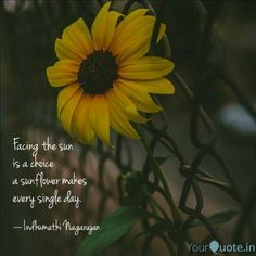 33 Inspirational Sunflower Quotes 33 Inspirational Sunflower Quotes,Inspirational Quotes 33 Inspirational Sunflower Quotes Related posts:Instant Pot Broccoli Cheese Soup (Pressure Cooker) - Savory Tooth - Instant pot soupBeef & Kale Soup in the Instant. Sunshine Quotes, Sun Quotes, Happy Quotes, Words Quotes, Life Quotes, Qoutes, Sayings, Pretty Words, Love Words