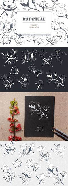 Hand Drawn Magnolia Flowers. Graphic Design Elements