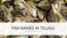 Fish Names in Telugu - English | తెలుగు చేపల ఇంగ్లీసు పేర్లు-వివిధ రకాల చేపలు | Fishes of Andhra Pradesh And Telengana | Apollo Fish | Pandugappa (పండుగప్ప), Pandumeenu Freshwater Sharks, Indian Goat, Sole Fish, Chicken Makhani, Grass Carp, Spanish Mackerel, Common Carp, Fish List