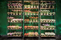 Silk-ka zijden bloemen niet van echt te onderscheiden. Verkrijgbaar bij Pieters sfeer en interieur te Zevenbergen.