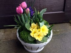 This basket was created for a client who wanted to send a spring garden to a friend of hers to cheer her up. I love the texture and color of the yellow primrose with the height of the pink tulips. The great thing about bulb plants is that they can be planted again next year too!