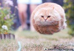 Kitty on the run - Go kitty!