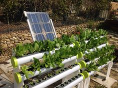 An Integrated Hydroponics System, inclusive of mobile rack, grow tube X4, solar panel, air pump and controller. https://www.facebook.com/media/set/?set=a.804105572940237.1073741830.116209295063205&type=1