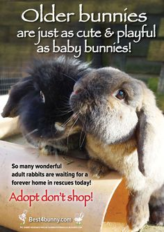 Mature bunnies are just as cute and playful as a young bunny! 8 reasons to adopt older rabbits - read them here  http://best4bunny.com/8-reasons-adopt-older-rabbits/