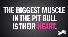 ❤ #PitBulls