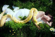 snake-field Laura Hollick