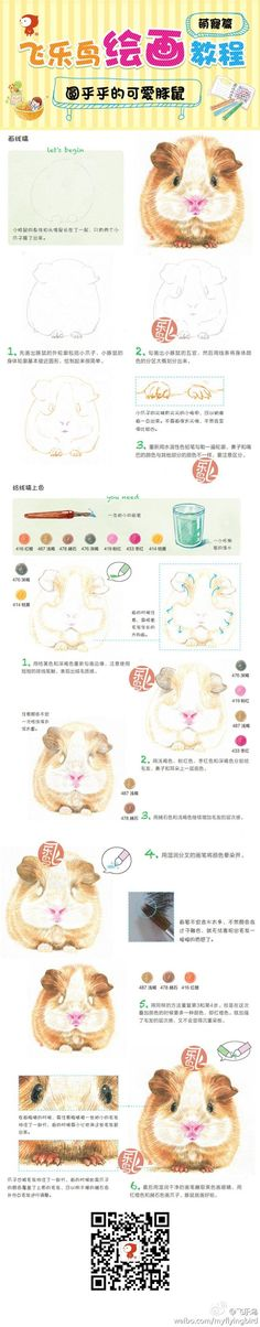 Yes, I know this is Chinese but the guinea pig is ADORABLE!!